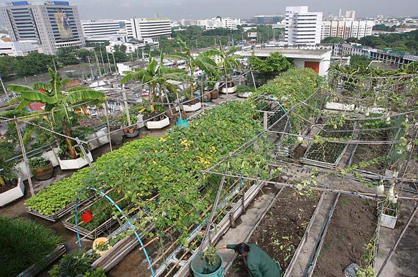 urban_farming_01