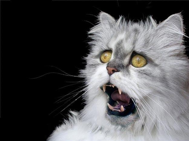 1319120366_cats-1