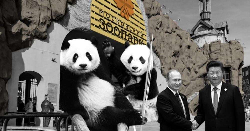 panda2-1024x538