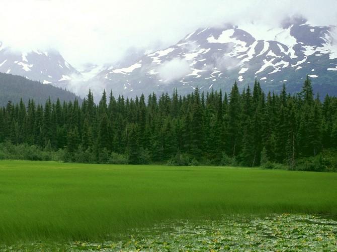 Greener_Pastures,_Moose_Pass,_Alaska_-_1600x1200_-_ID_35787551411