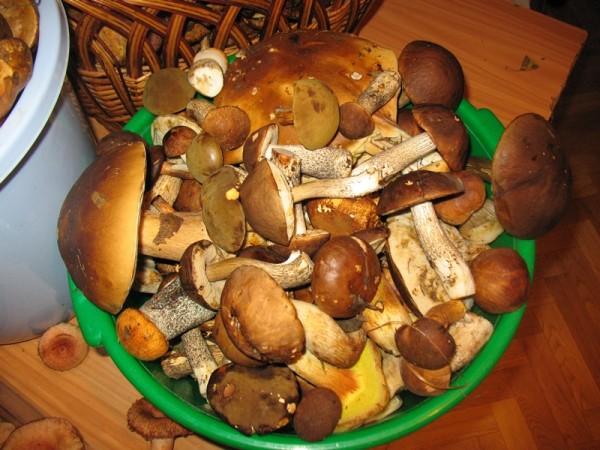 К чему снится ходить за грибами