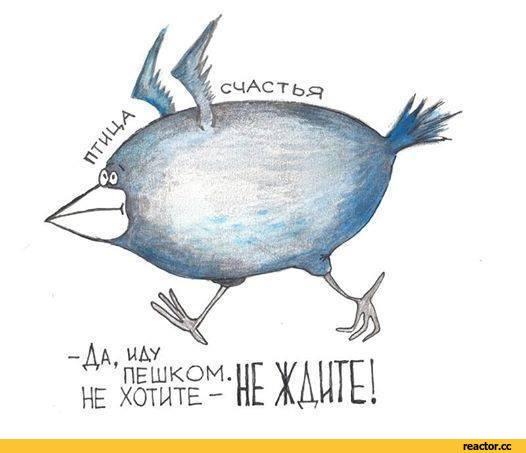 птица-живность-птица-счастья-1544734