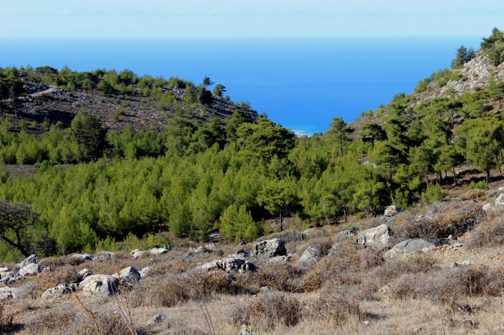 История Кипра или пора валить из ЖЖ на самую удобную площадку IMG_8378