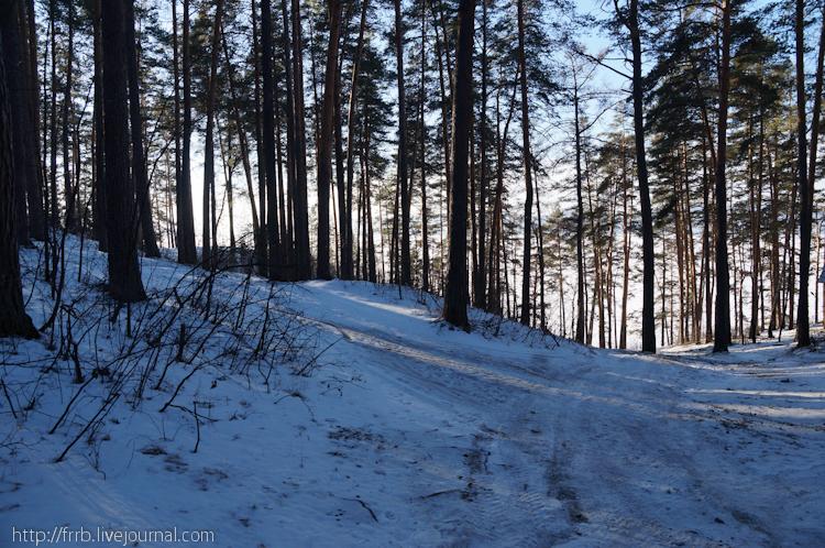 Сосны практически окружают Тургояк (10.01.2014)