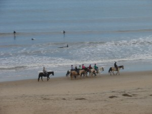 Surfers and horses at Virginia Beach