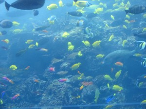 Aquarium Reef Fish (2)