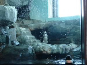 Aquarium African Penguins (6)