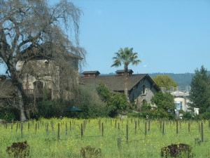 Napa Valley Wine Country (2)