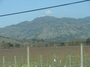 Napa Vineyards (3)