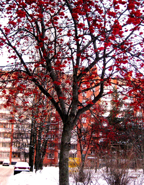 Зима красна