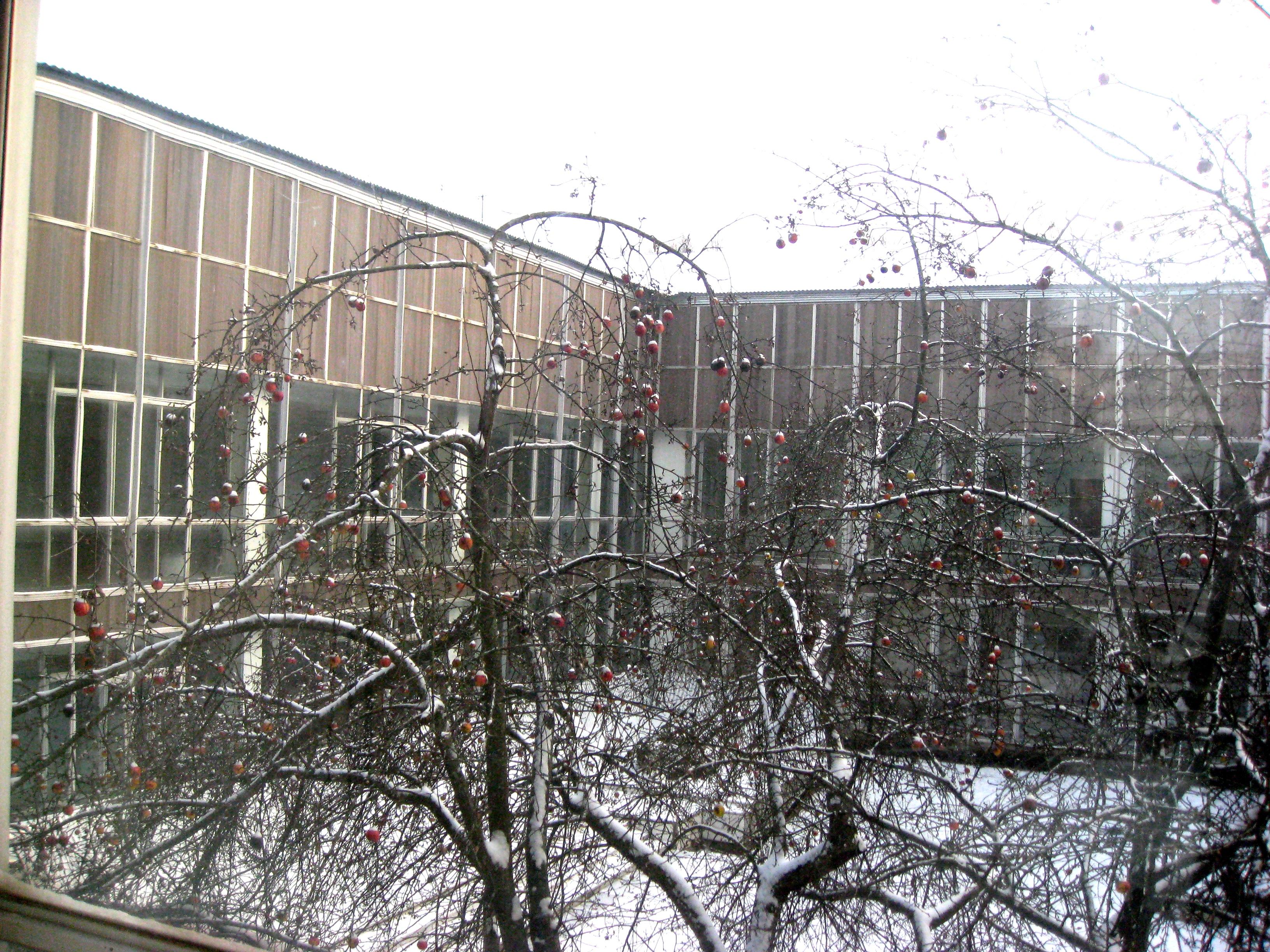 Внутренний двор института