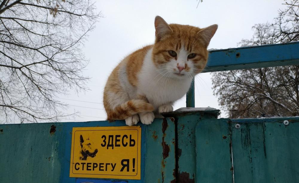 Рыжий охранник :)