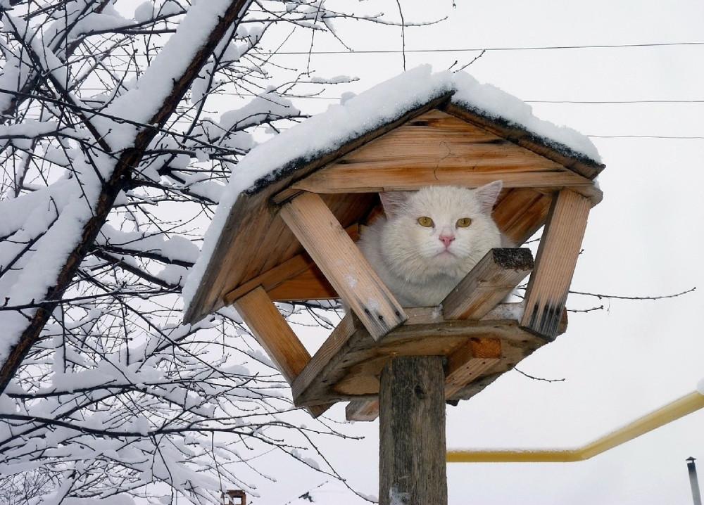 картина Саврасова «Коты прилетели»