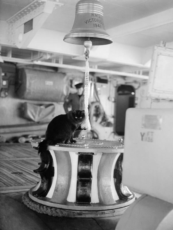 Корабельный кот. Фото для иллюстрации