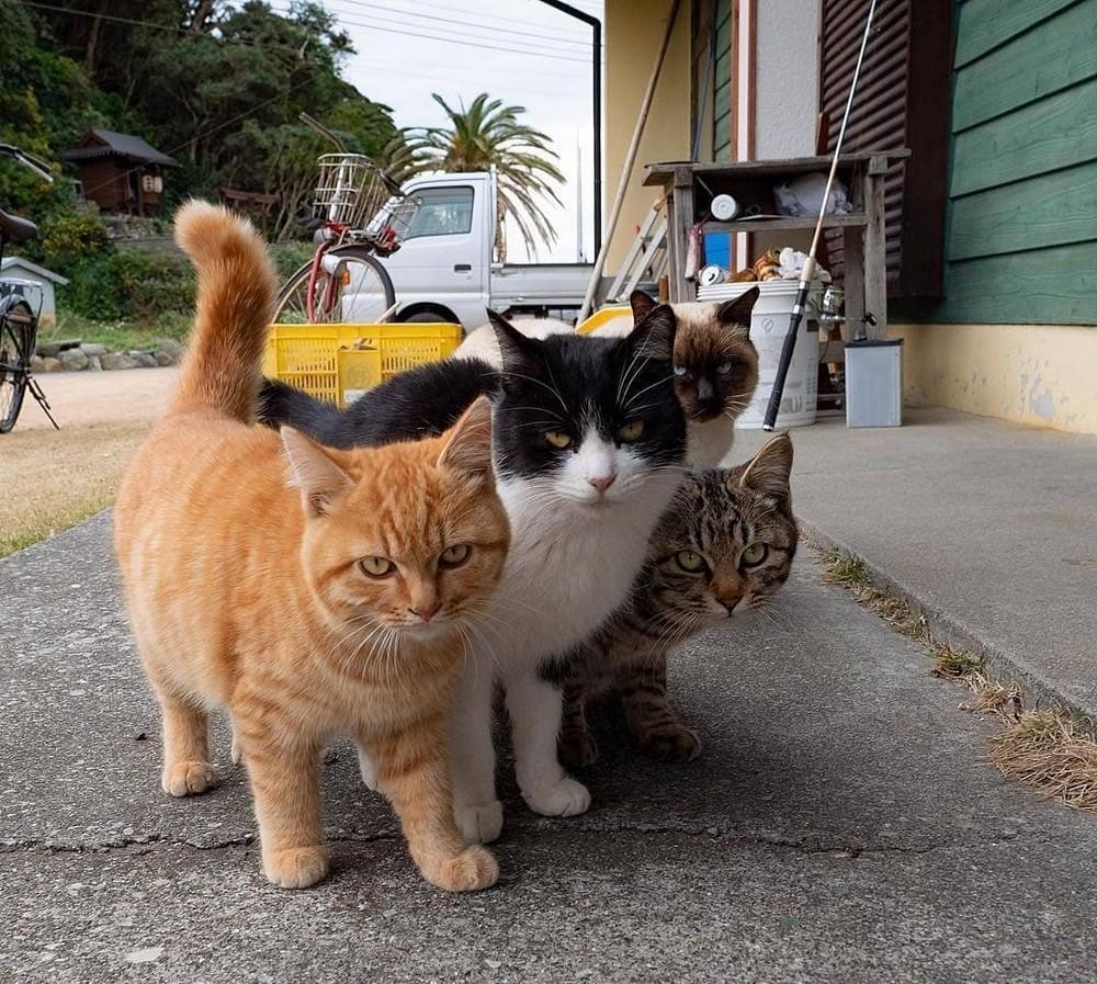 Веселая картинка с котиками