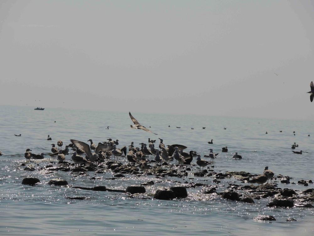 остров Черепаха - 2019