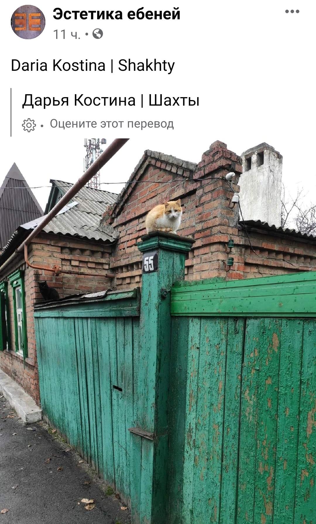 Кот надёжно скрасит любые ебеня 🐈