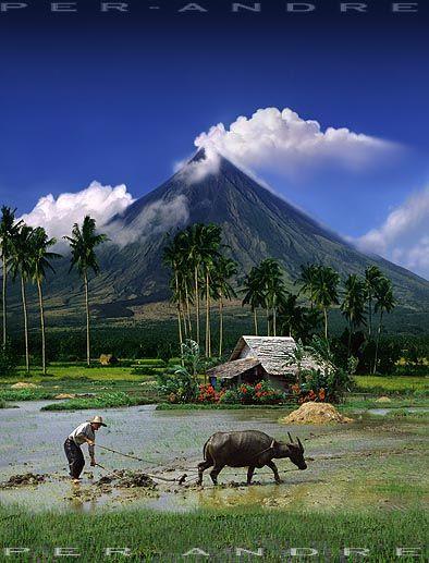 Mayon~volcano