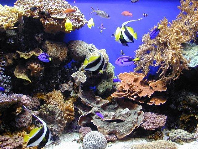 Fish at Monterey Bay Aquarium