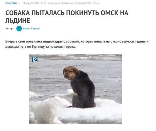 собака-на-льдине-уплывака