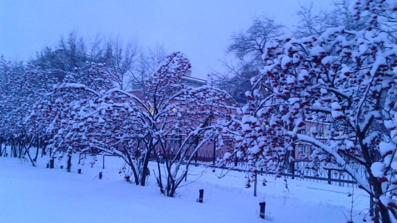 Рябина в снегу.jpg