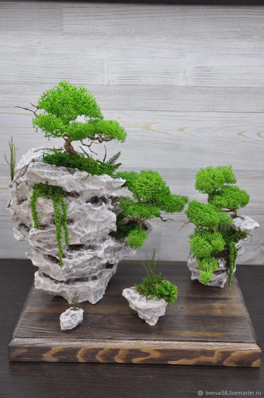 8736c8c5ec7c70a0e7b57ae61b4g--tsvety-i-floristika-bonsaj-na-skalah.jpg