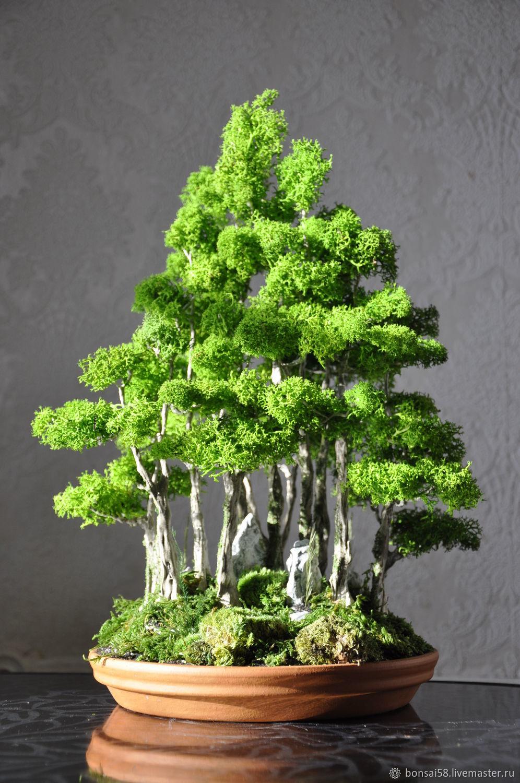 d7217a5acf765bb497b3673a3a1t--tsvety-i-floristika-bonsaj-roscha.jpg