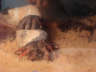 crab pile!