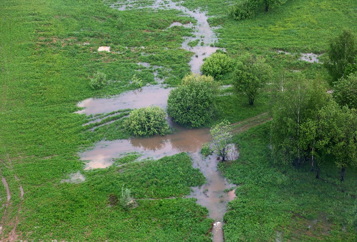 above-MosObl-Dedovsk-forest-pole