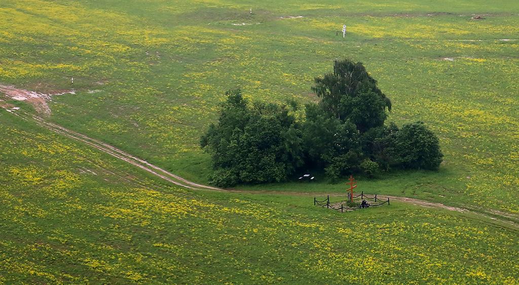 above-MosObl-Dedovsk-forest-pole-2