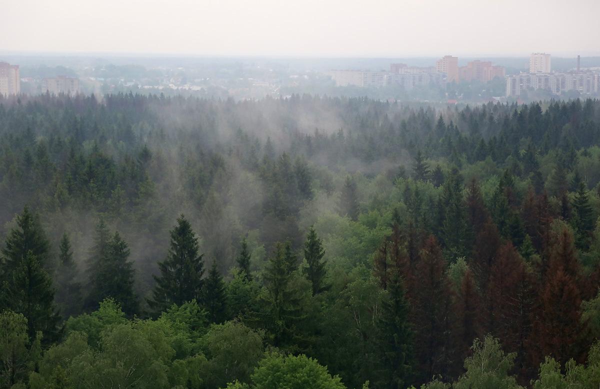 above-MosObl-Dedovsk-forest