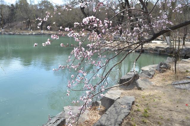 часто встает пекин весной март фотографии здесь можно покататься