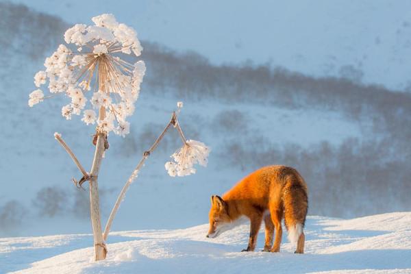 Фото Дениса Будькова