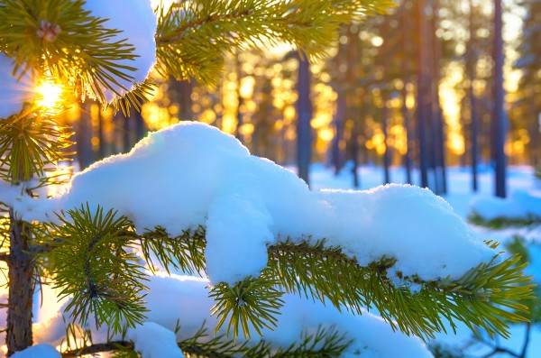 Winter_Snow_Branches_464622