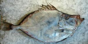 рыба-дори1