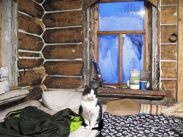 Кот или кошка в керженской избе 2019