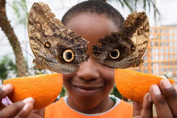 Две бабочки СОВИНЫЙ ГЛАЗ