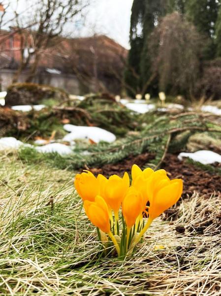 Цветы в саду ТУ март 2021