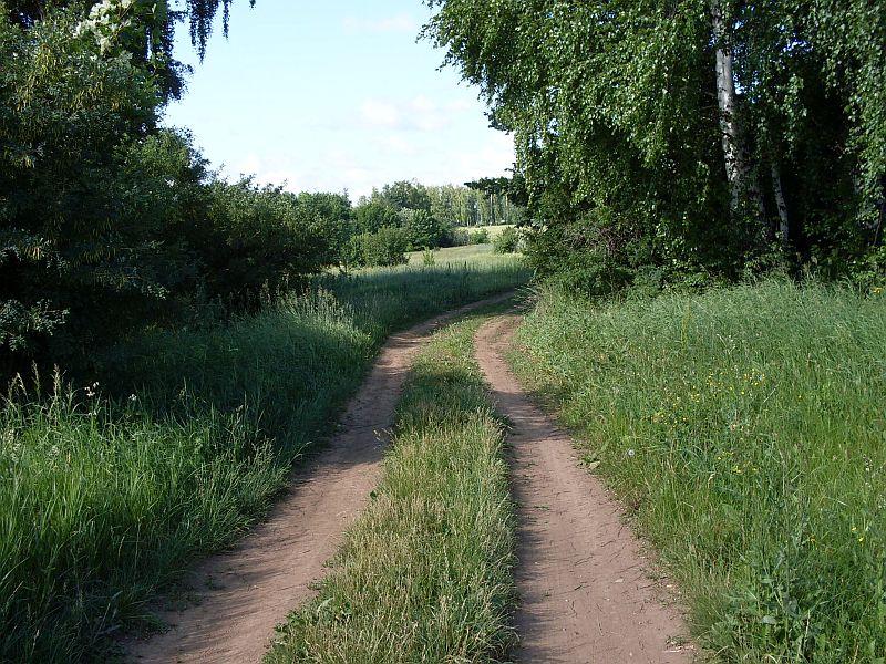 Дорога к лесопосадке