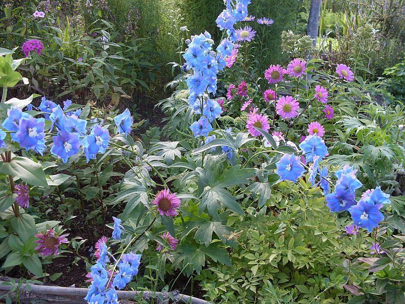 Цветы сос 1
