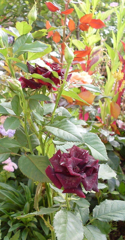 Цветы сос 2