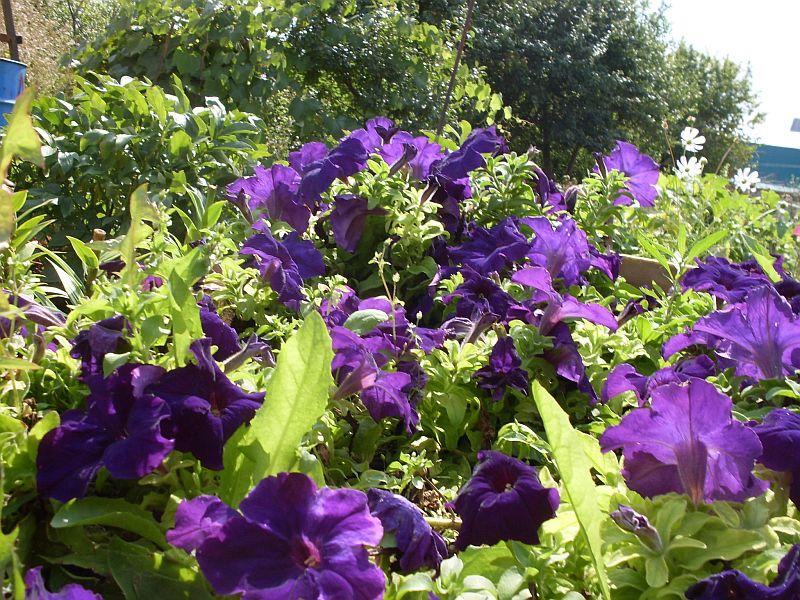 Цветы сос 7