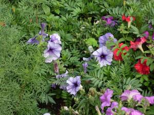 Сине-белые цветы