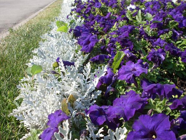 Синие цветы с папоротником