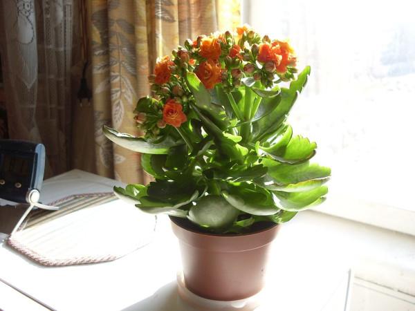 Цветок 1 на солнце