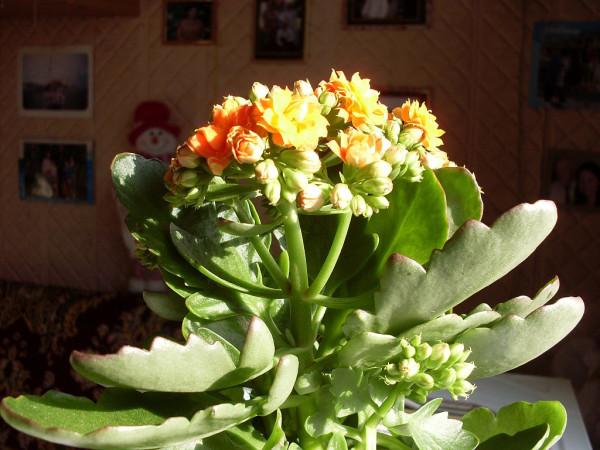 Цветок 2 на солнце