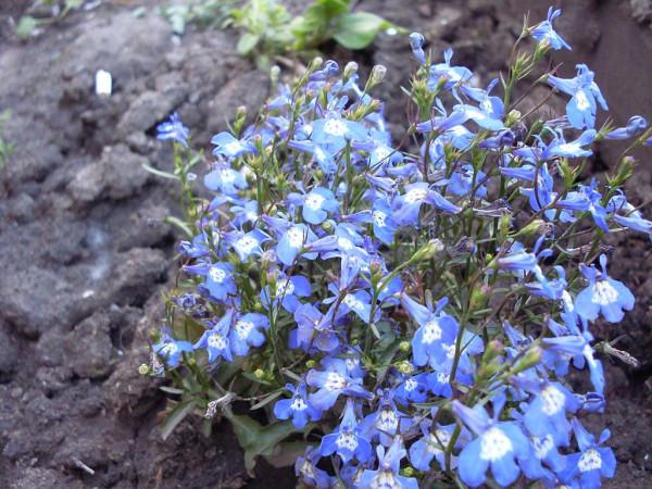 синие 3