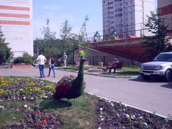 Фото 1. Павлин из цветов. 10 июня 2014