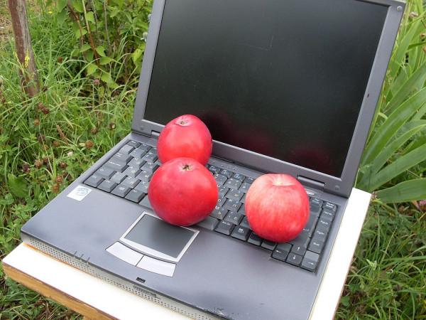 Ноутбук РТ5 на даче