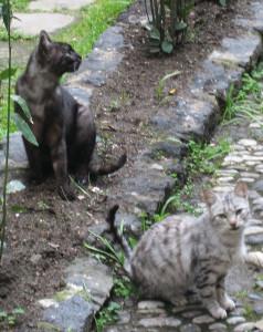 Кошки в Сицилии